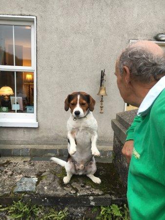 Dungarvan, Irlandia: Mac Sits Up