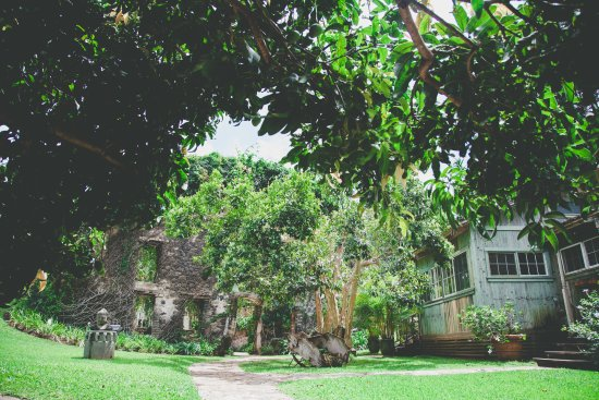 Haiku Mill and the Cane House, from under the mango tree.