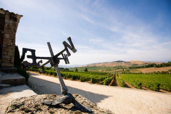 Quinta da Barroca : Vista para as vinhas