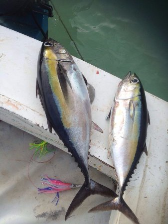 West End, Honduras: Catch of the Day