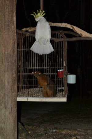 Platypus Bush Camp: Rocky and his dinner guest