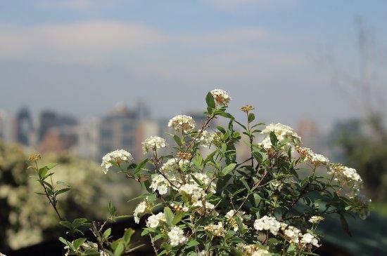Foto de jardin japones santiago vista tripadvisor for Jardin japones de santiago