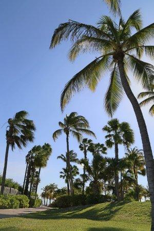 Wilhelmina Park: palmeras del parque