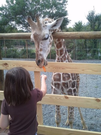 Vienna, VA: Close encounter with giraffe (costs $5 extra, payable at desk or gate leading to giraffe cage)