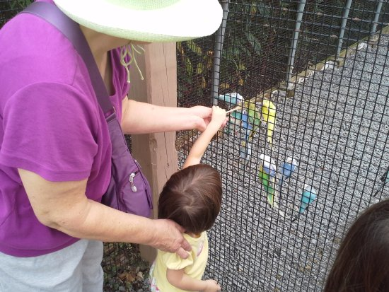 Vienna, VA: Smaller children can feed the birds without actually entering the cage.