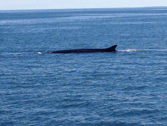 Saint Andrews, كندا: A large razorback whale.
