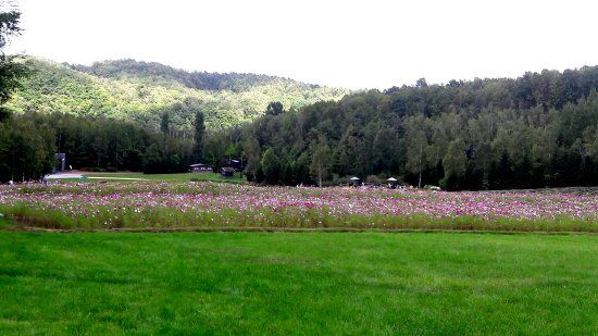 Takino Suzuran Hillside National Park: 20160915_174627_large.jpg