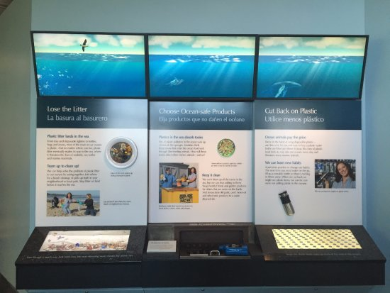 Monterey Bay Aquarium: We did learn a lot and found out some interesting facts