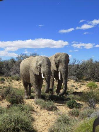 Ceres, Sydafrika: elephant