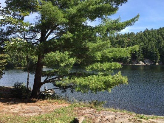 Haliburton, Canadá: Raven lake is a dream come true in Algonquin highlands. It is a canoe haven with some great camp