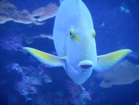 Wailuku, Hawái: Friendly fish