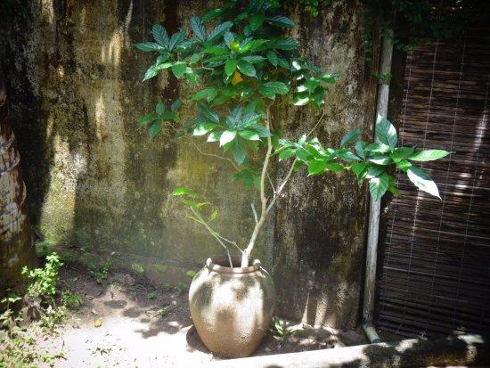 Les 3 Elephants Cherai Beach: In the private sitting area