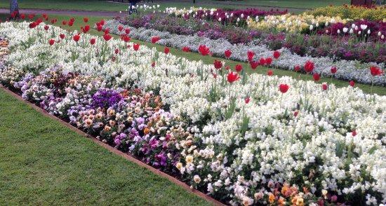 Toowoomba, Australia: Spring flowers