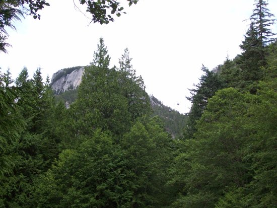 Squamish, Canadá: Sea to Sky Gondola visible through the trees on the path to the Shannon Falls lookout