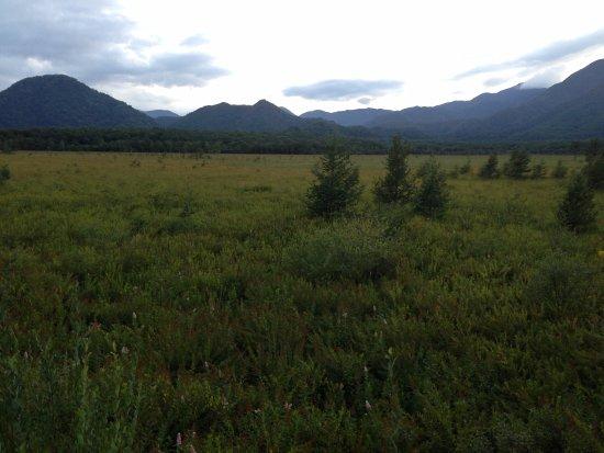 Senjogahara Field : 戦場ヶ原の風景