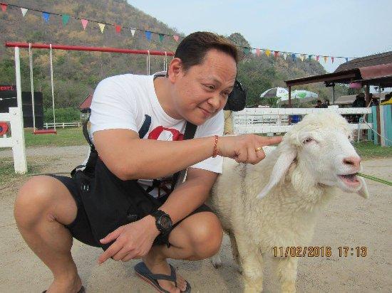 Cha-am, Thailand: Swiss Sheep Farm