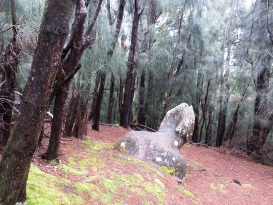Hoolehua, Havai: Women would sleep on the rock overnight