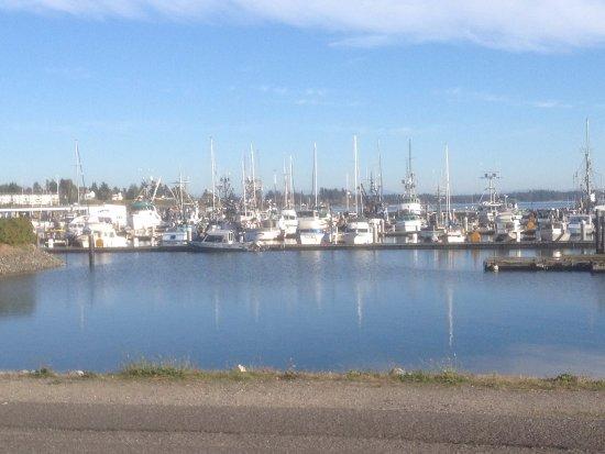 Blaine, WA: The marina