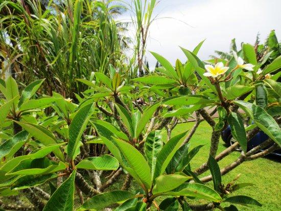 Kualapuu, Χαβάη: Beautiful grounds