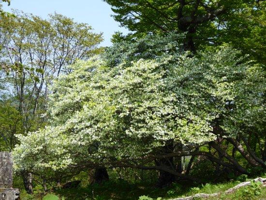 Kanagawa Prefecture Photo