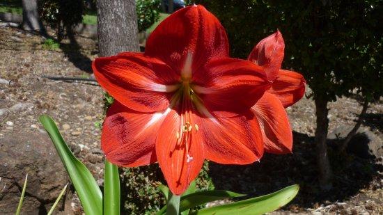 วุลลองกอง, ออสเตรเลีย: Beautiful flower in the Temple Ground