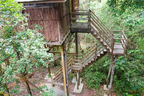 Permai Rainforest Resort: Treehouse rooms are quite high up