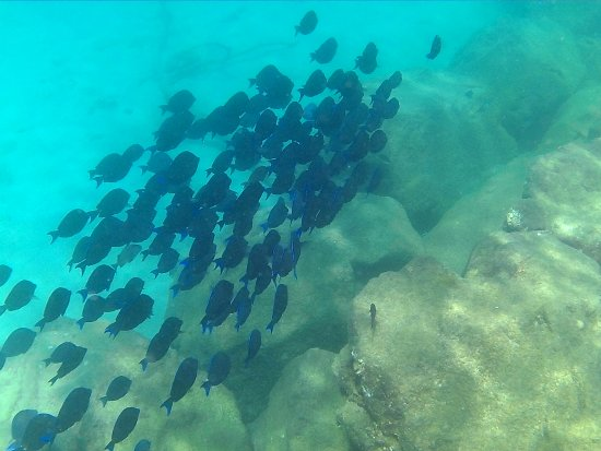 Holetown, Barbados: house reef has some great fish for snorkeling around.
