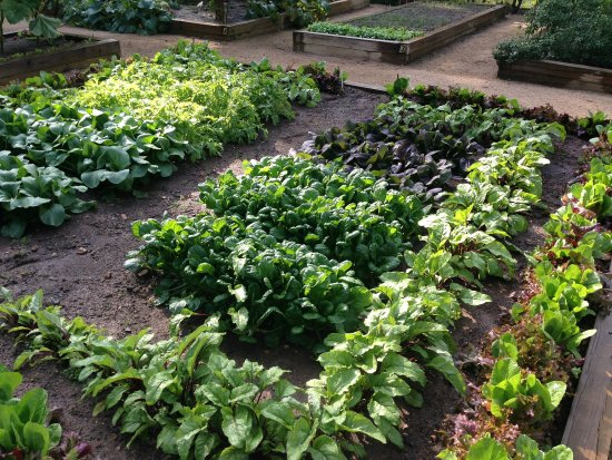 Keswick, VA: Garden