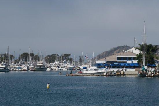 Dana Point, Kaliforniya: hamn med många sjölejon
