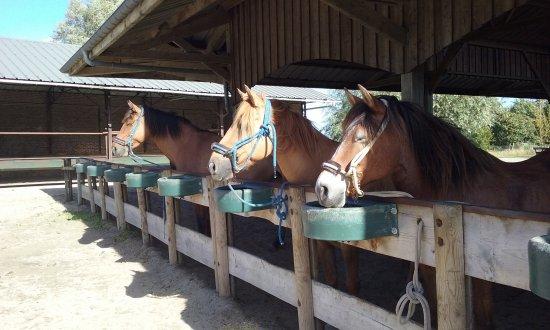 Espaces Equestres Henson