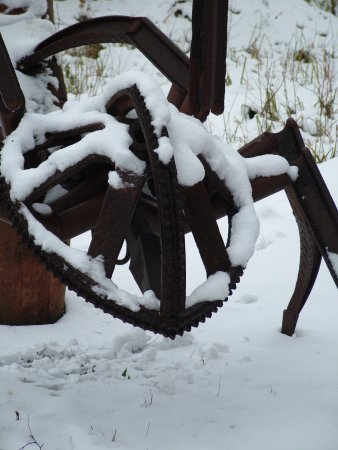 Shorne Woods Country Park: Frozen spider