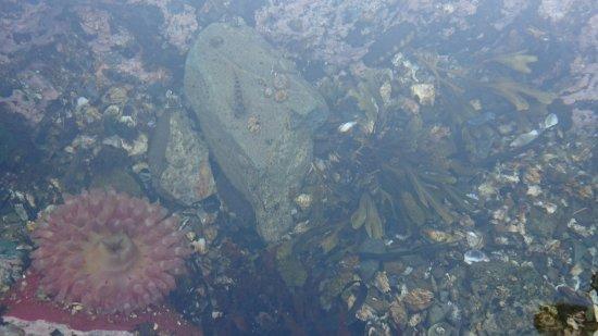 Friday Harbor, WA: DSC_2507_large.jpg