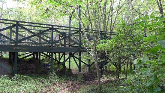 Hara-mura, Japan: 美術館から森へ続く橋