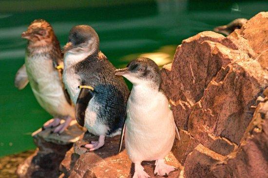 Braintree, Μασαχουσέτη: New England Aquarium