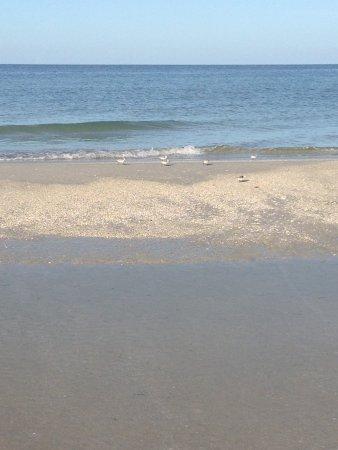 Barefoot Beach Resort: Beach walk in the morning!