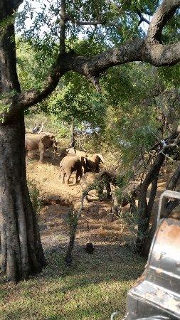 巴卢莱私家狩猎区照片
