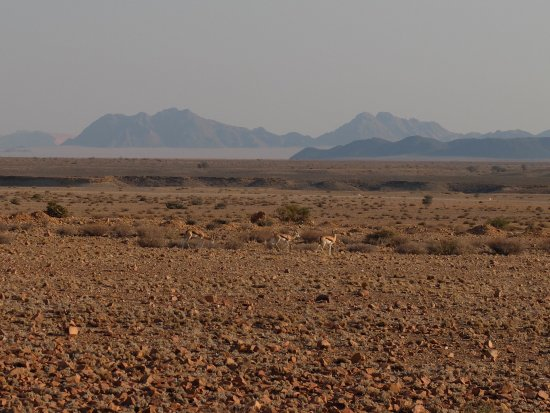 Sesriem, Namibia: our desert neighbors