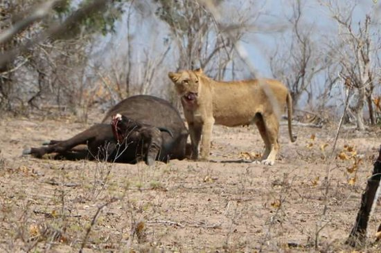Kruger National Park: FB_IMG_1474552887713_large.jpg