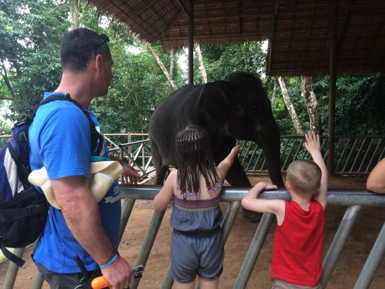 Chalong, Thailand: 8 year old elephant.... not for riding, but loves fruit