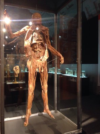 Museum Exhibition Human Body