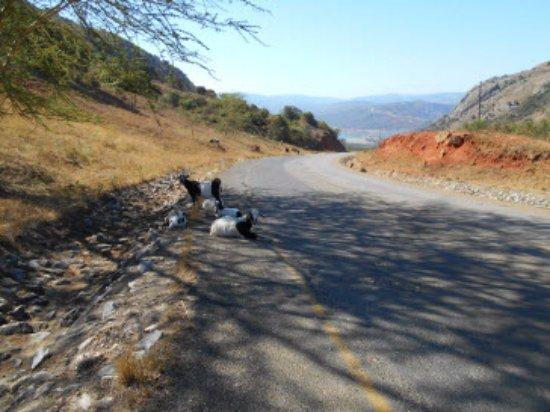 Piggs Peak, Suazi: Alrededores