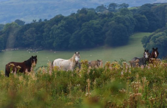 Conwy Water Gardens: Horses that I assume live at the reserve