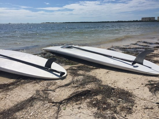 Palm Harbor, FL: Paddle Board Rental