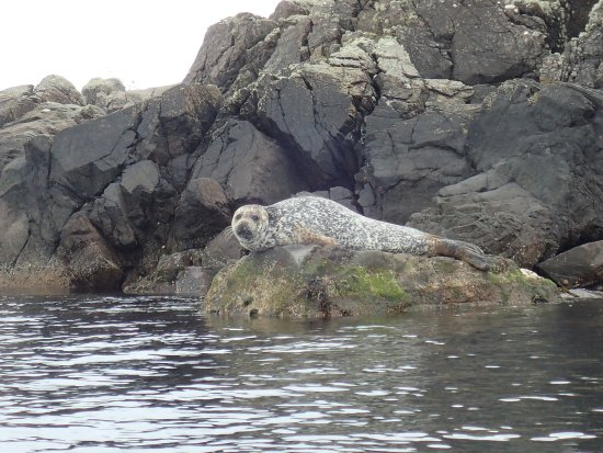 Port Ellen, UK: Seals!