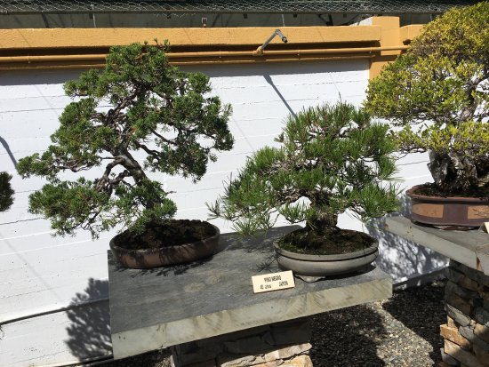 Japanese Style Roof Of The Museum Best To Look At From The Garden With Flamboyant Bonsai Trees Picture Of Museo Del Bonsai Marbella Tripadvisor