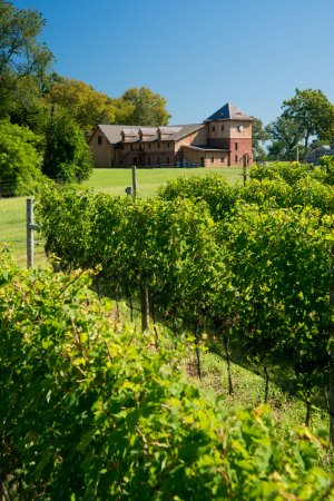 Chesapeake City, MD: Vines with Winery in background