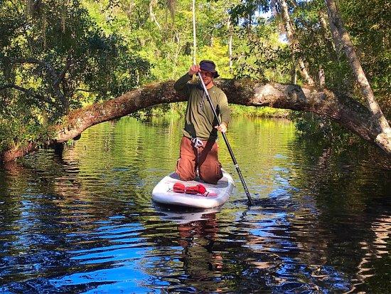 SUP lesson and tour on Lofton Creek in  Fernandina Beach