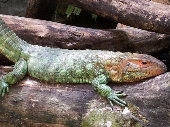 Zoo Miami: Este lugar es hermoso, para el que le gusta estar en contacto directo  con la naturaleza, y disf
