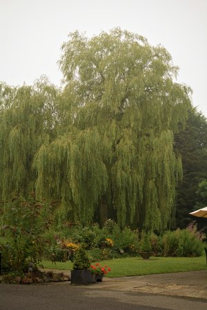 Chiseldon House: big garden to walk around and space for kids to explore
