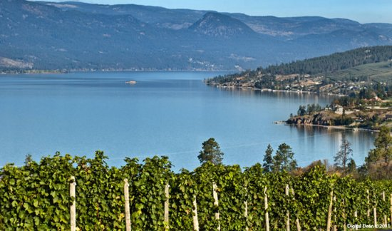 Vernon, Canadá: Visit a few of our local Wineries